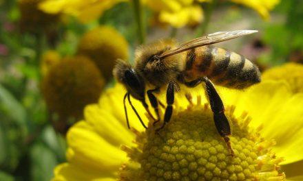 Le Parlement européen au chevet des abeilles