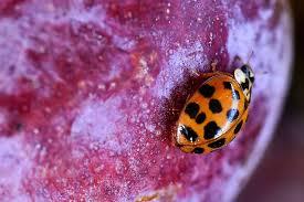 Les insectes sont nos amis