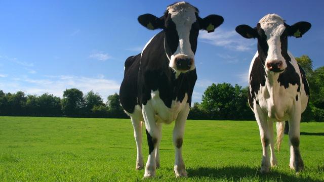 Le Parlement européen dit non au clonage dans l'agriculture et l'alimentaire !